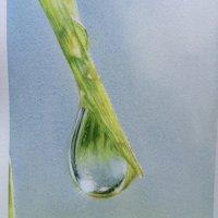 IMG 1702 - Raindrop study