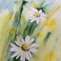 IMG 3731 (1) Daisy