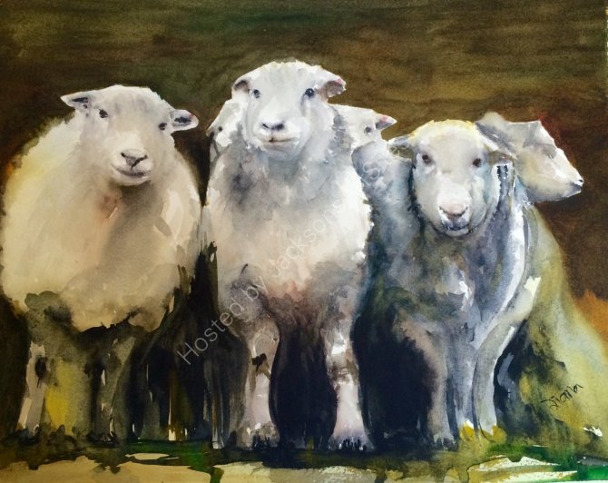 Three sheep
