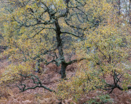 Autumn Colours, Muir of Dinnet NNR II