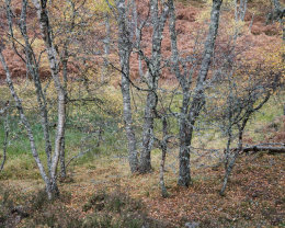 Autumn Colours, Muir of Dinnet NNR III