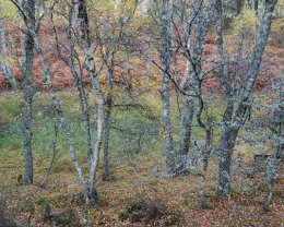 Autumn Colours, Muir of Dinnet NNR IV