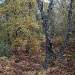 Autumn Colours, Muir of Dinnet NNR
