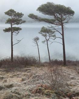 Pine Family, Loch a' Chroisg