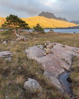 Scots Pines & Torridonian Sandstone, Loch Maree