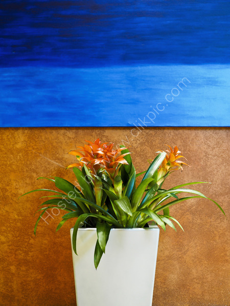 Green plant with blue wall