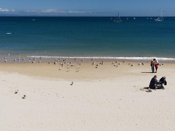 Beach scene with gulls