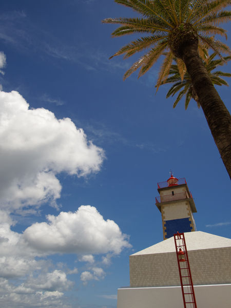 Lighthouse with palms