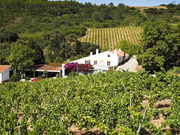 Vineyards, Portugal