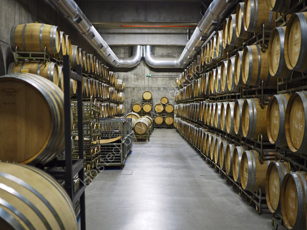 Wine maturing in oak casks, Portugal