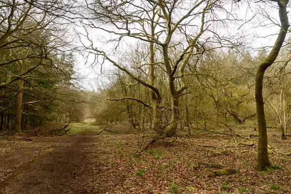 Whithington Woods