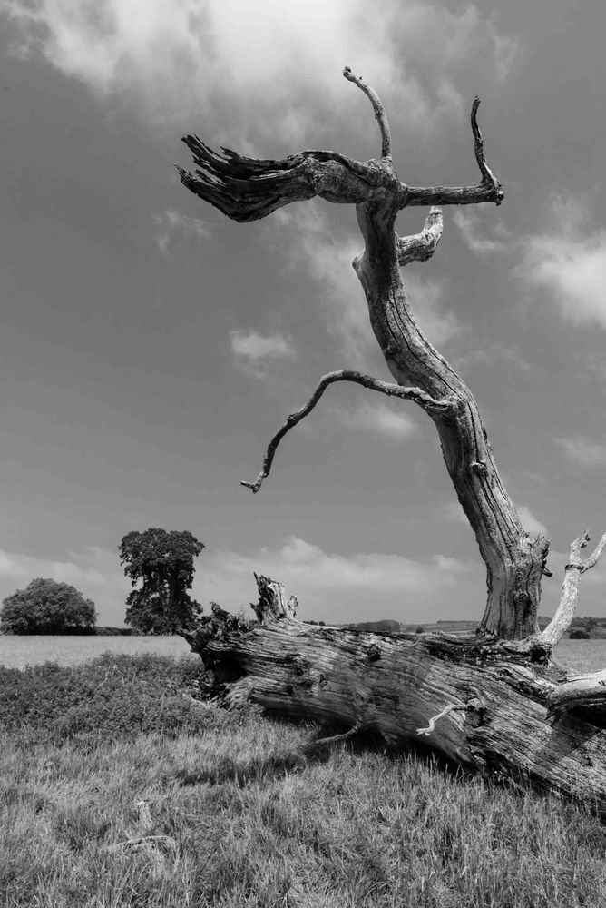 Wild Cotswolds#5