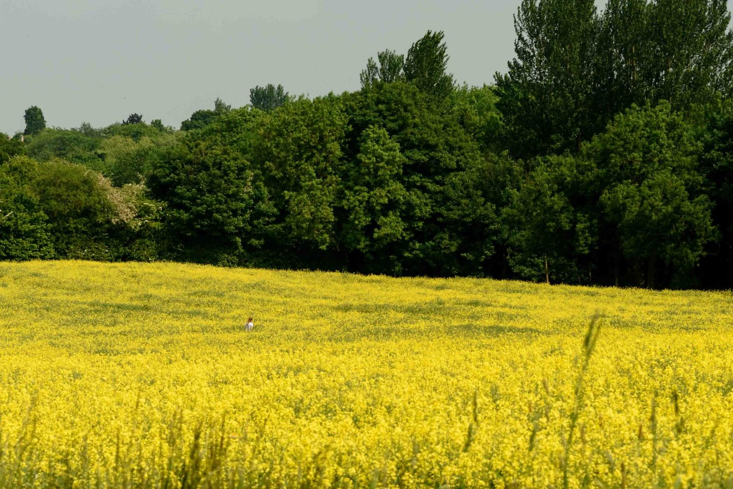 Wild Cotswolds#7
