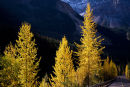 """""""Banff in the Fall"""""""