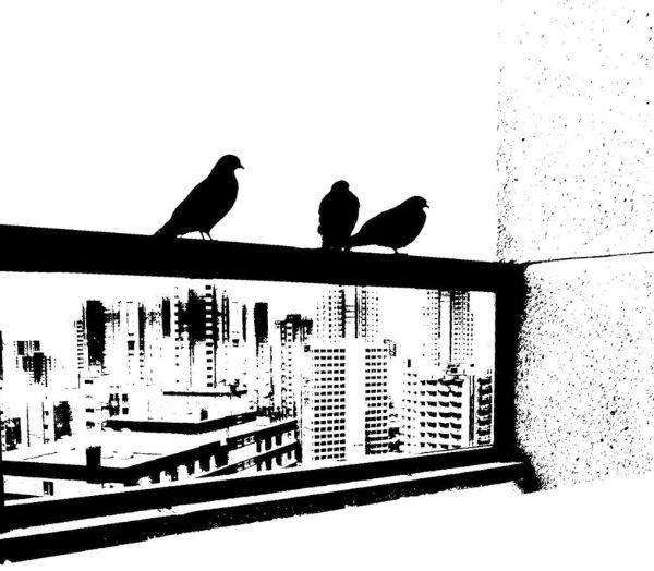 Pigeons on a rail