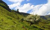 Whitethorn in Bloom. Glenade. North Leitrim