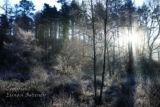 Winter Morning. Dromahair. Co. Leitrim
