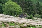Ruin on the Mountain. Co. Sligo