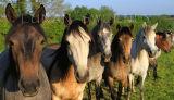 Connemara  Line Up