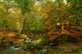 Autumn .Cloghlea. Co Wicklow