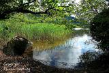 Hidden Mooring. Glencar Lake. Co. Leitrim