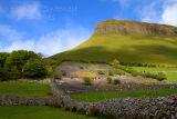 Bluebell fields on the slopes of Ben Bulben Mountain . Co. Sligo