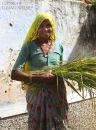 Farmers Wife. Rajistan. India