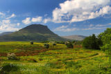 Ben Wisken Mountain. Co. Sligo