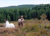 Goats Maam Cross. Ireland