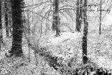 Snowfall. Co. Leitrim