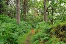 Forest Trail. Gleniff. Co. Sligo.