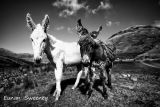 Black and White. Connemara. Ireland