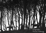 Wood n, Horses