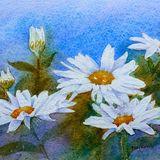Eileen McGeown Watercolour daisies 2