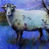 Eileen McGeown Wooly Sheep in Blues