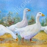 Eileen McGeown Watercolour waddling and pecking geese