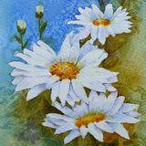 Eileen McGeown still life daisies in watercolour