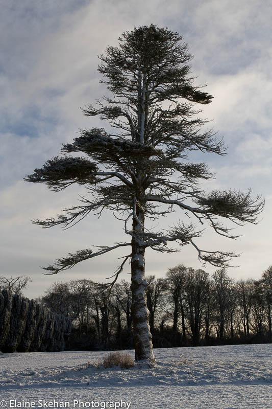 Tree standing proud