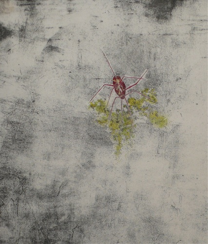 Instar <br> Etching and water colour, edt 15 <br> 44 x 38 cm, 2012