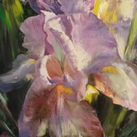 Lily explosion, SOLD