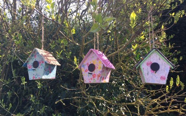 Bird Box Decorations