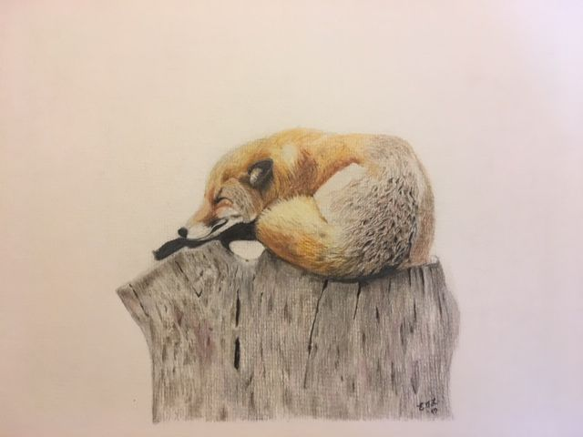 'Let Sleeping Foxes Lie'
