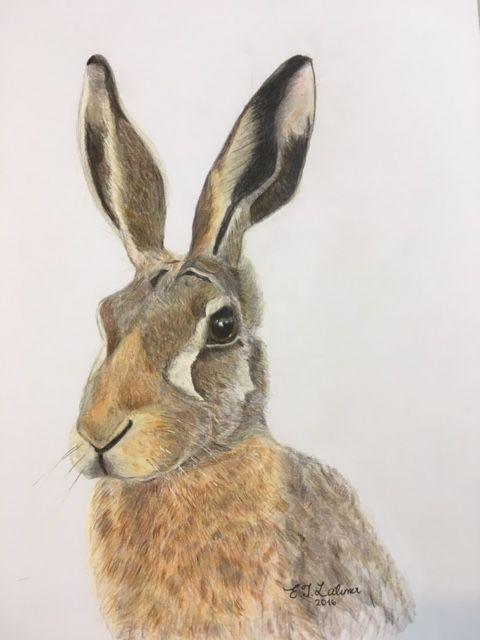 'Hare (head study)'