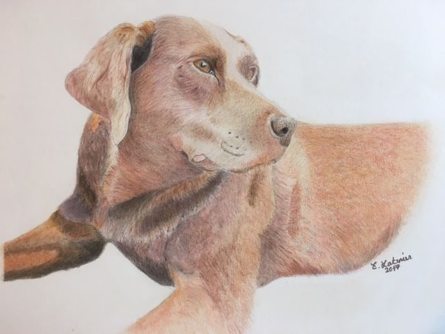 Labrador (Original not Print)