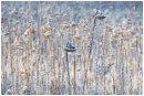 Frozen Sunflowers - Jane White ARPS