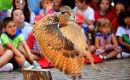 Bird of Prey dislay, Festival, Bilbao.