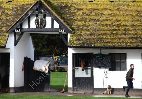 Stable view @ nicky Henderson's champion jumps stable