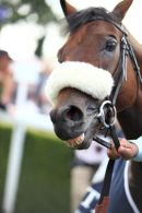 Opinion Poll after winning the feature race the Goodwood Cup.