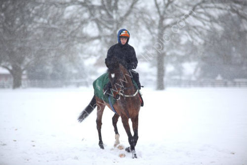 Ian Williams' racehorse string at exercise in the snow.