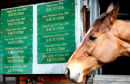 Kauto Star favourite for the Cheltenham gold cup @ Cheltenham.